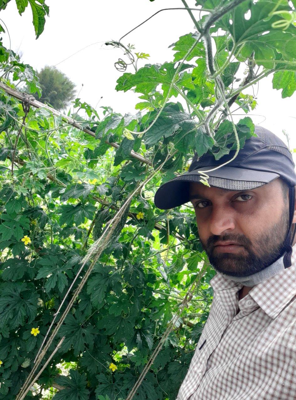कृषकका दुख : ऋण काढेर तरकारी खेती, घाटा लाग्दा विदेशिन बाध्य